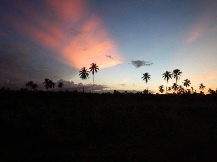 deforestazione papua4