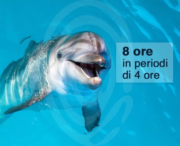 delfino ita