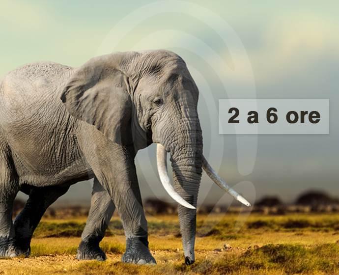 elefante ita