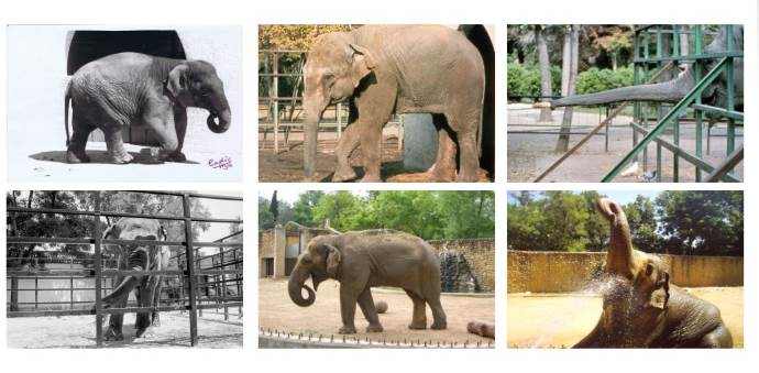 flavia elefante1