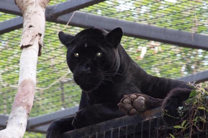 giaguaro zoo selfie