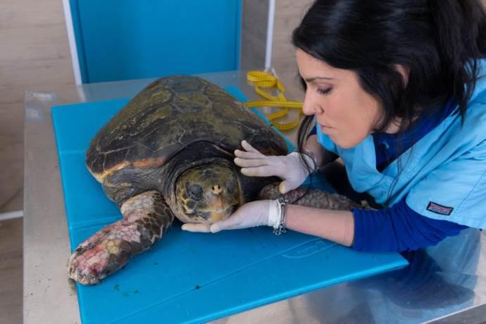 tartaruga afrodite1