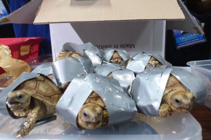 tartarughe valigia