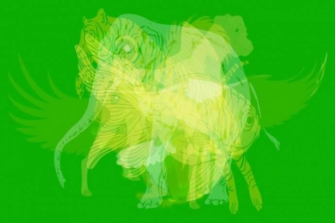 test_animali