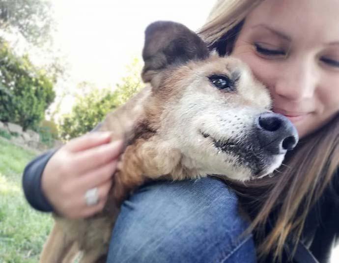 volontaria cani anziani