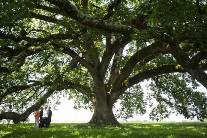 alberi dichiarazione