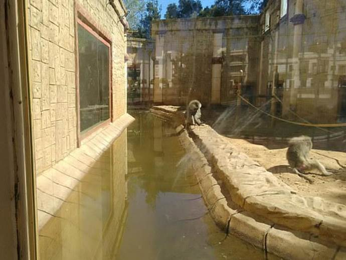 animali zoo spagna1