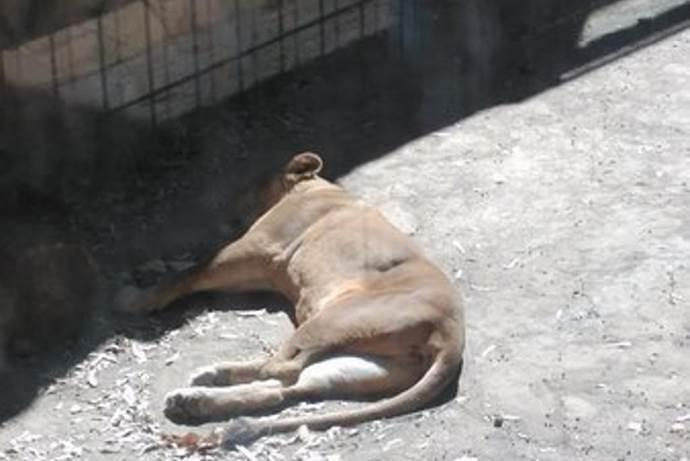 animali-zoo-spagna