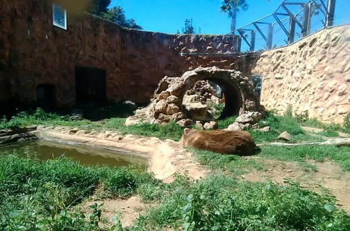 animali zoo spagna3