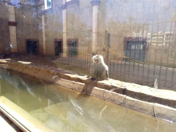 animali zoo spagna4