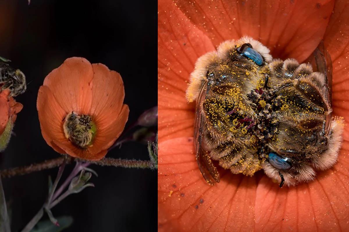 api-dormono-fiore