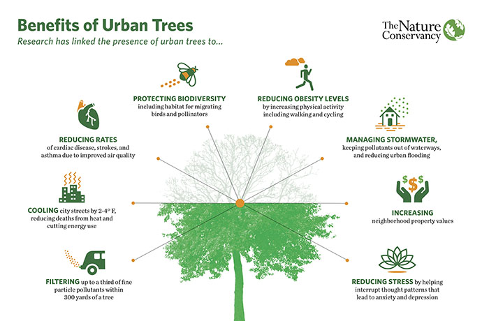 benefici alberi