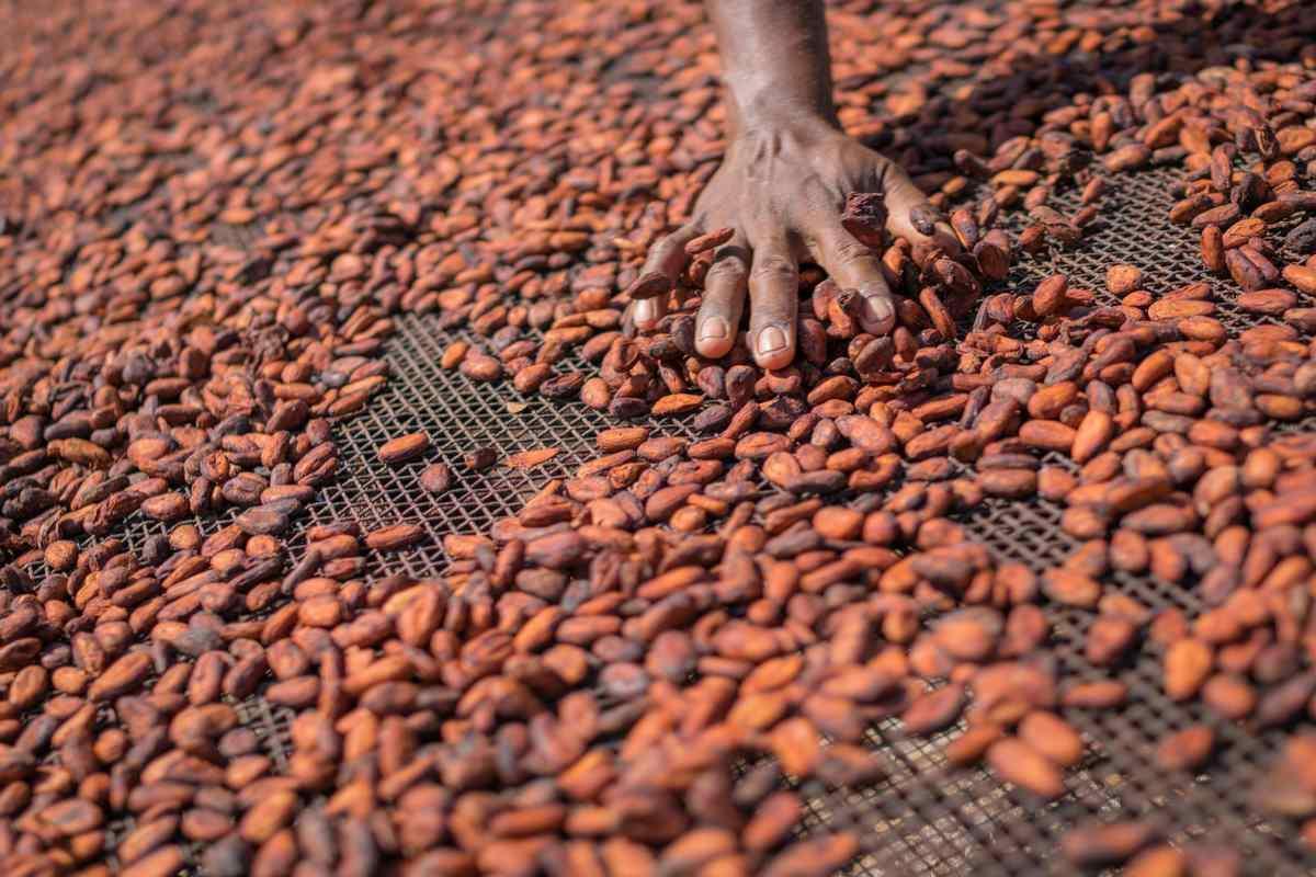 cacao bucce riciclo elettricità