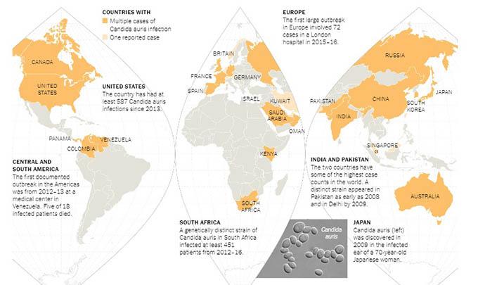 candida auris paesi