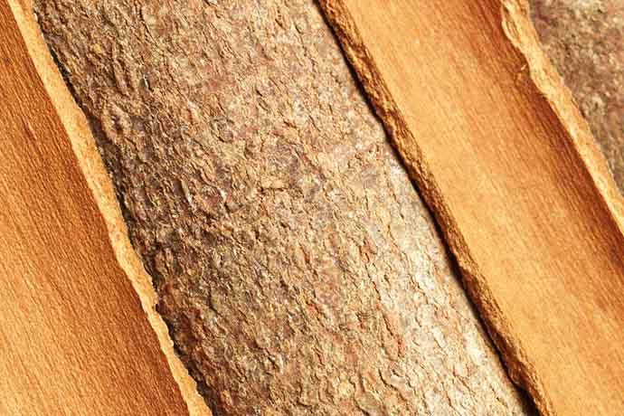 cannella legno