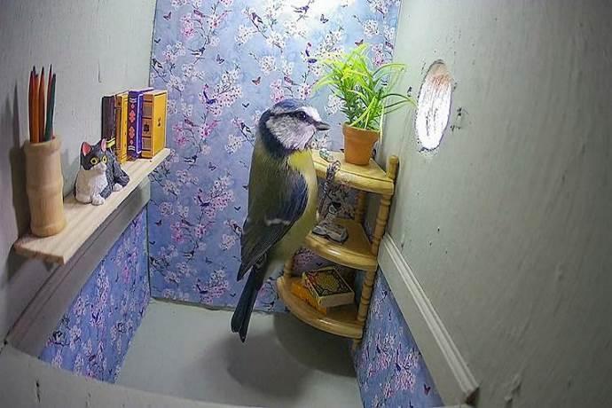 casa-uccelli
