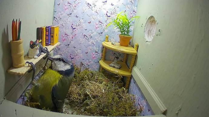 casa uccelli1