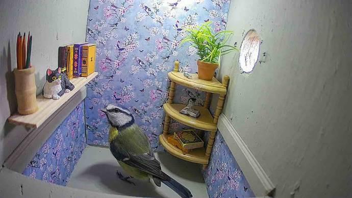 casa uccelli2