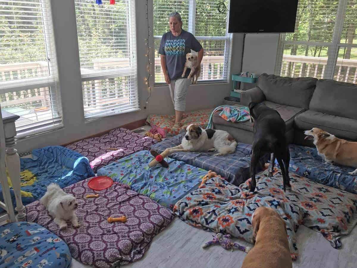 rifugio cani anziani