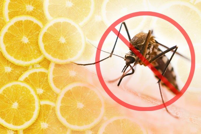 zanzare-limone