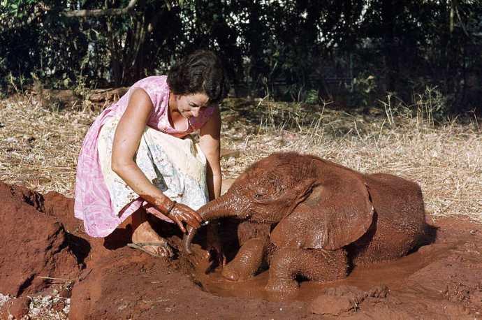 daphne elefanti2