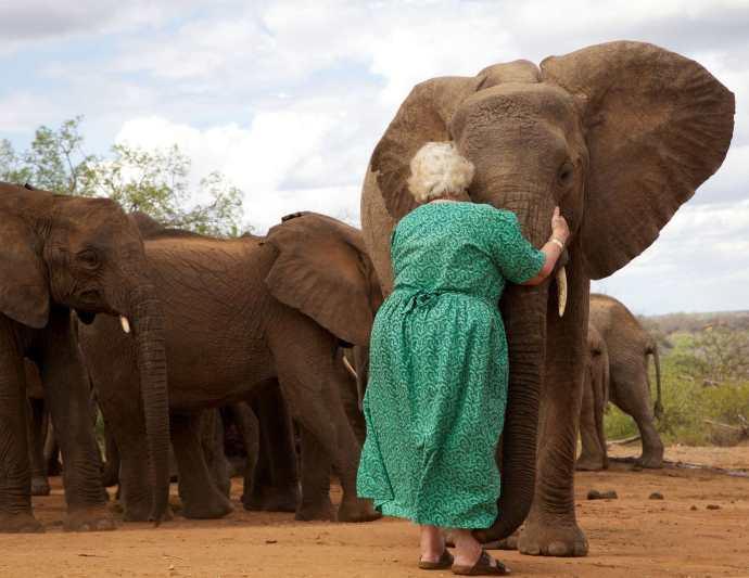 daphne elefanti3