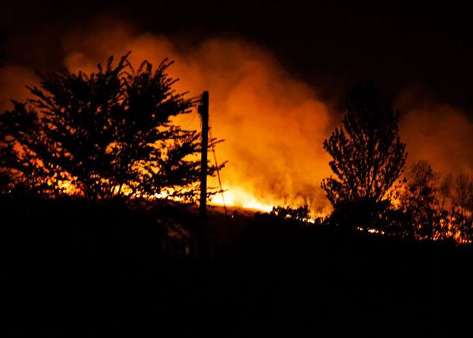 foresta incendio