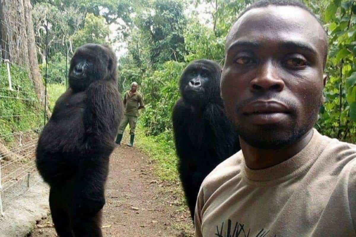 gorilla-guardia-parco