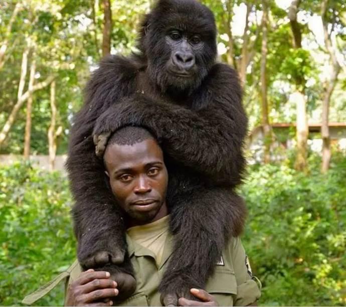 gorilla guardia parco1