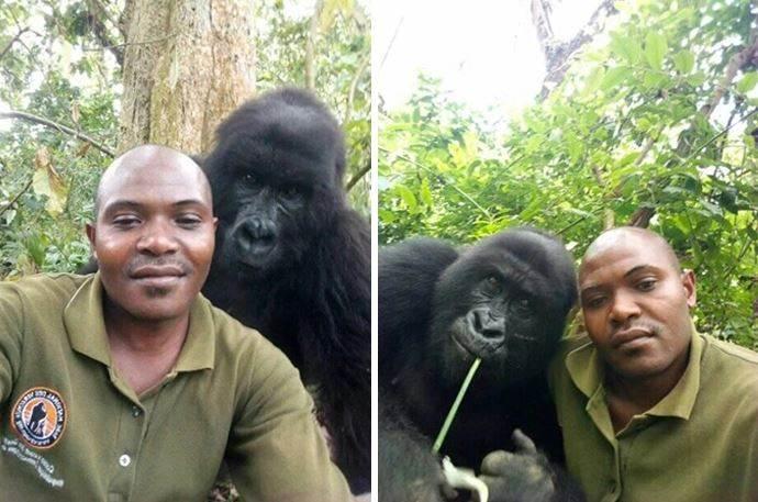 gorilla guardia parco2