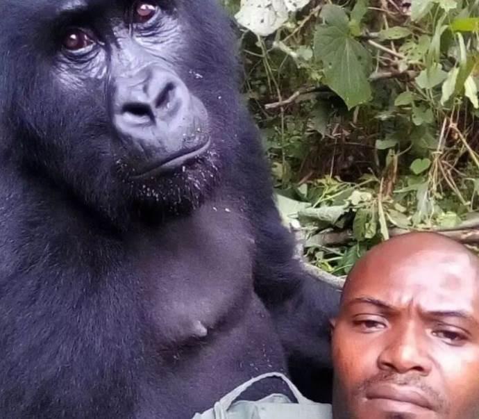 gorilla guardia parco3
