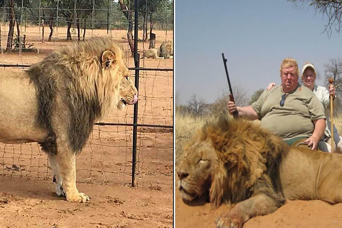 leoni-allevamento-