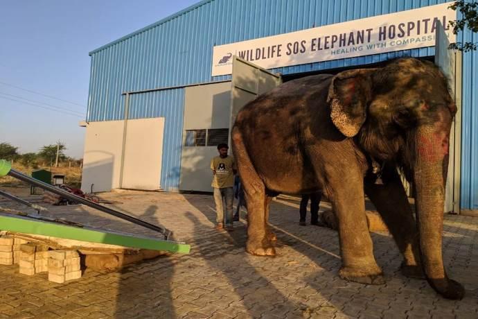 ospedale-elefanti-india