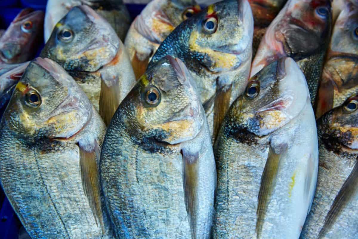 pesci antidepressivi e antibiotici