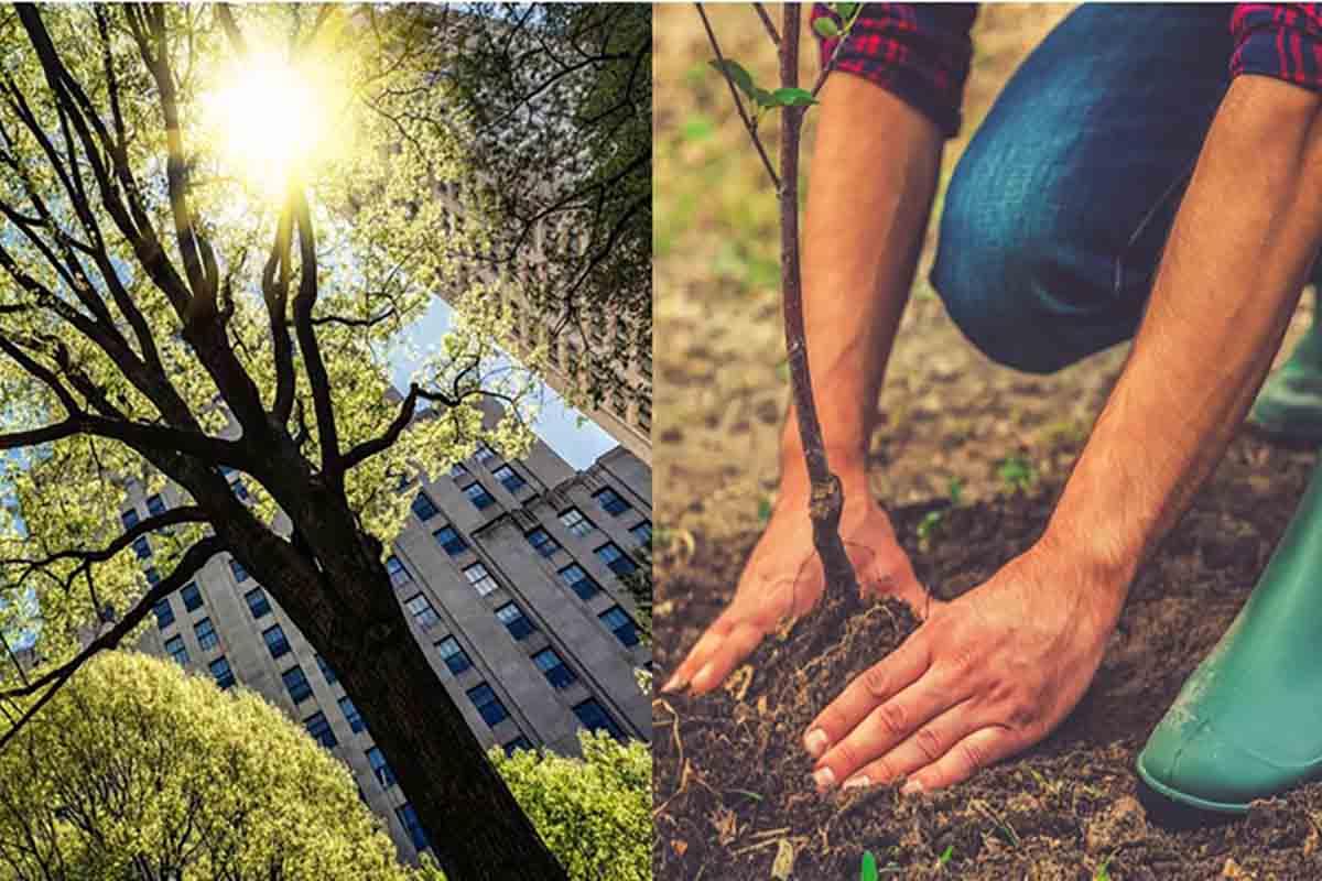 piantare-alberi-usa