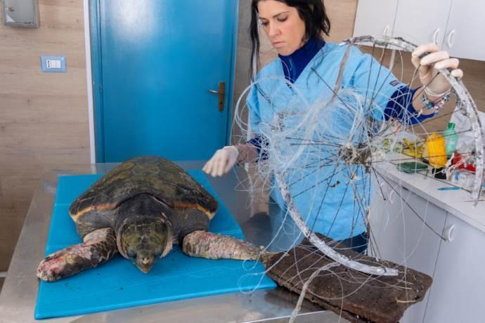 afrodite tartaruga cerchione