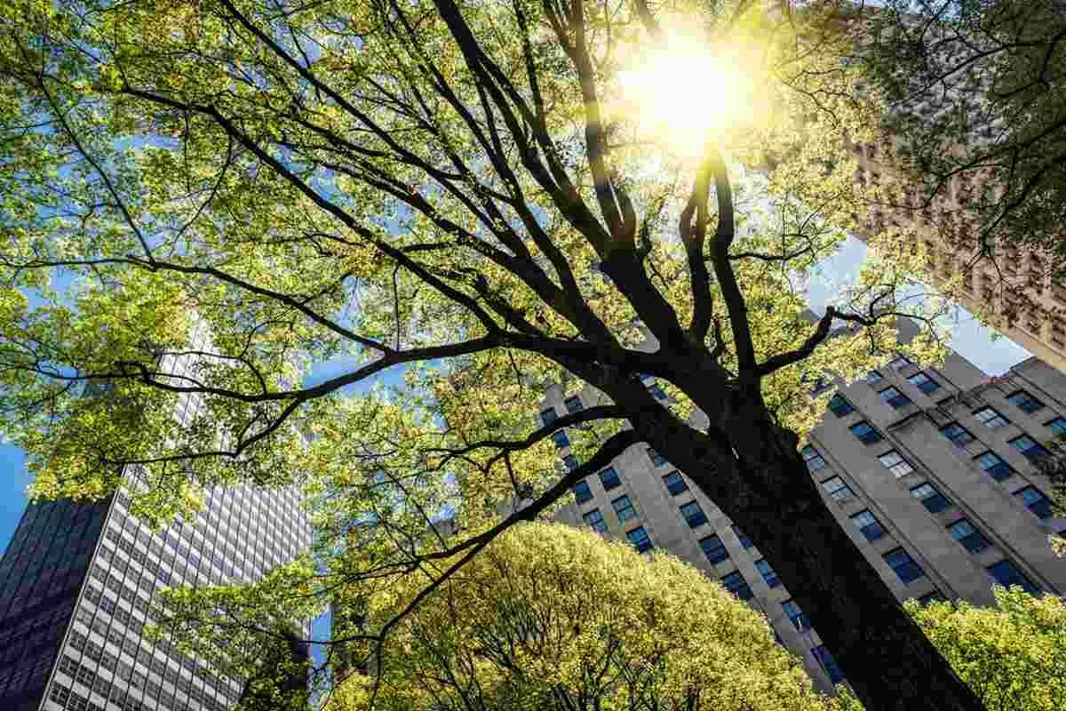 alberi uk