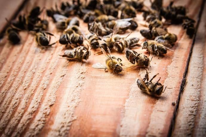 Risultati immagini per api site:greenme.it