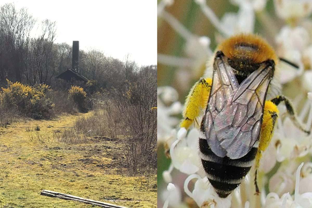 biodiversità-scozia-