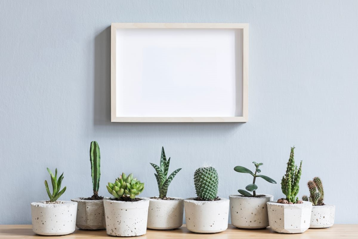 cactus Feng Shui