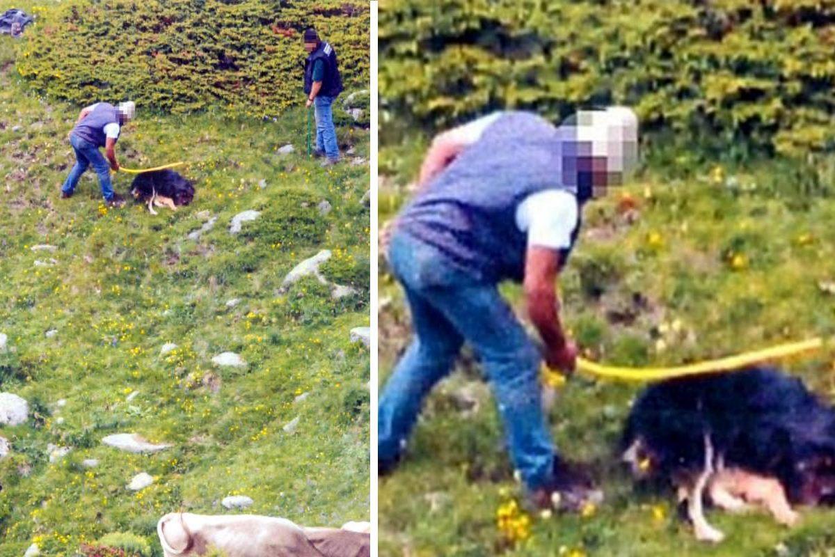 cane ucciso a bastonate