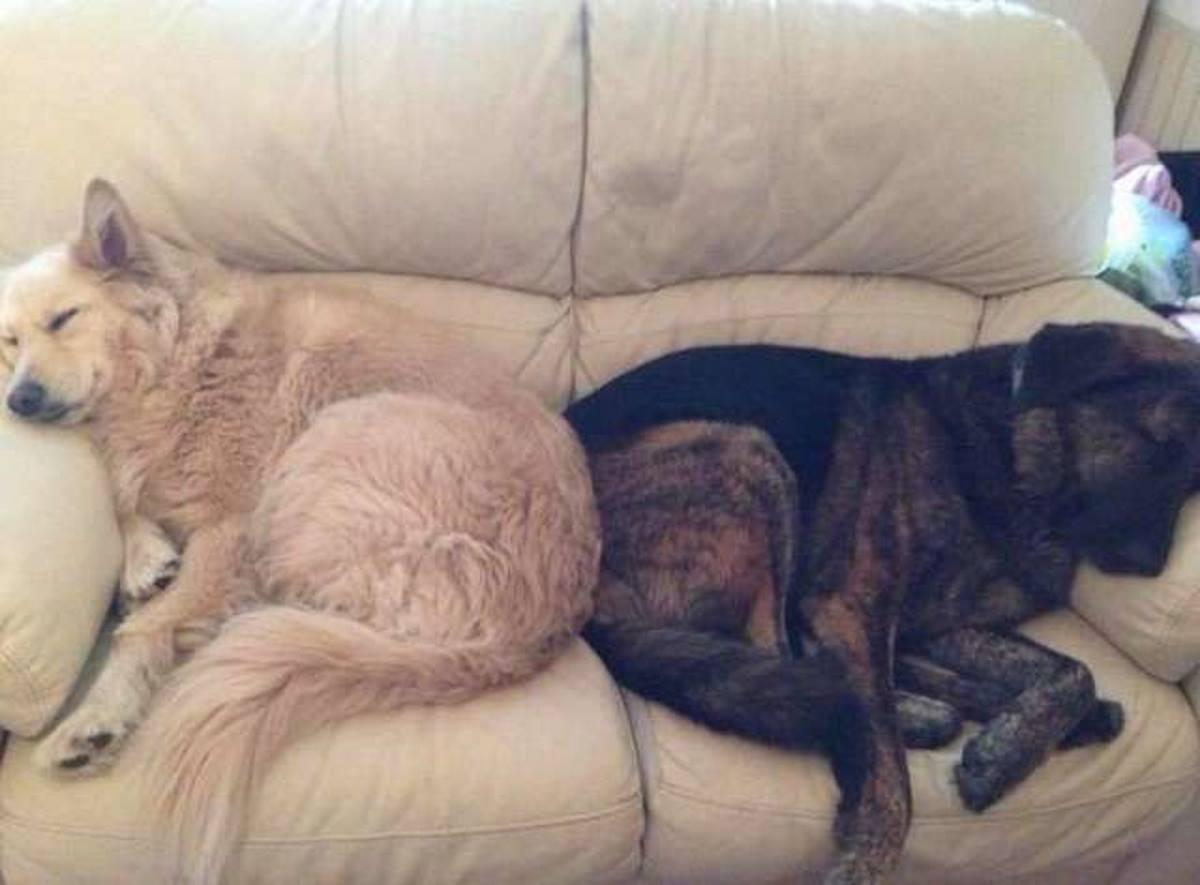 cani inseparabili cuscino 3