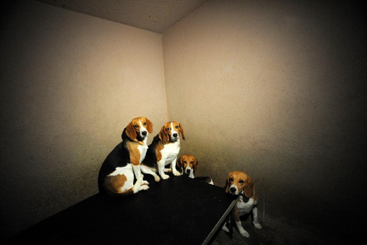 sperimentazione cani gatti olanda