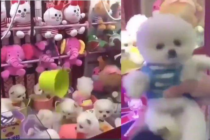 macchine cani