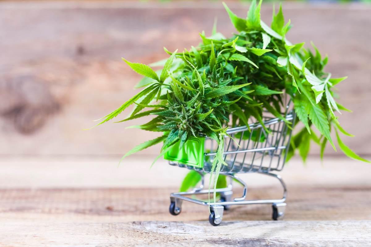 cannabis-light-sentenza-