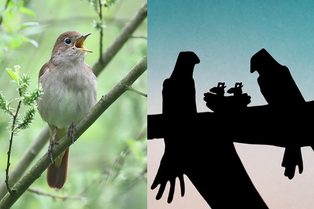 canzone-uccelli-