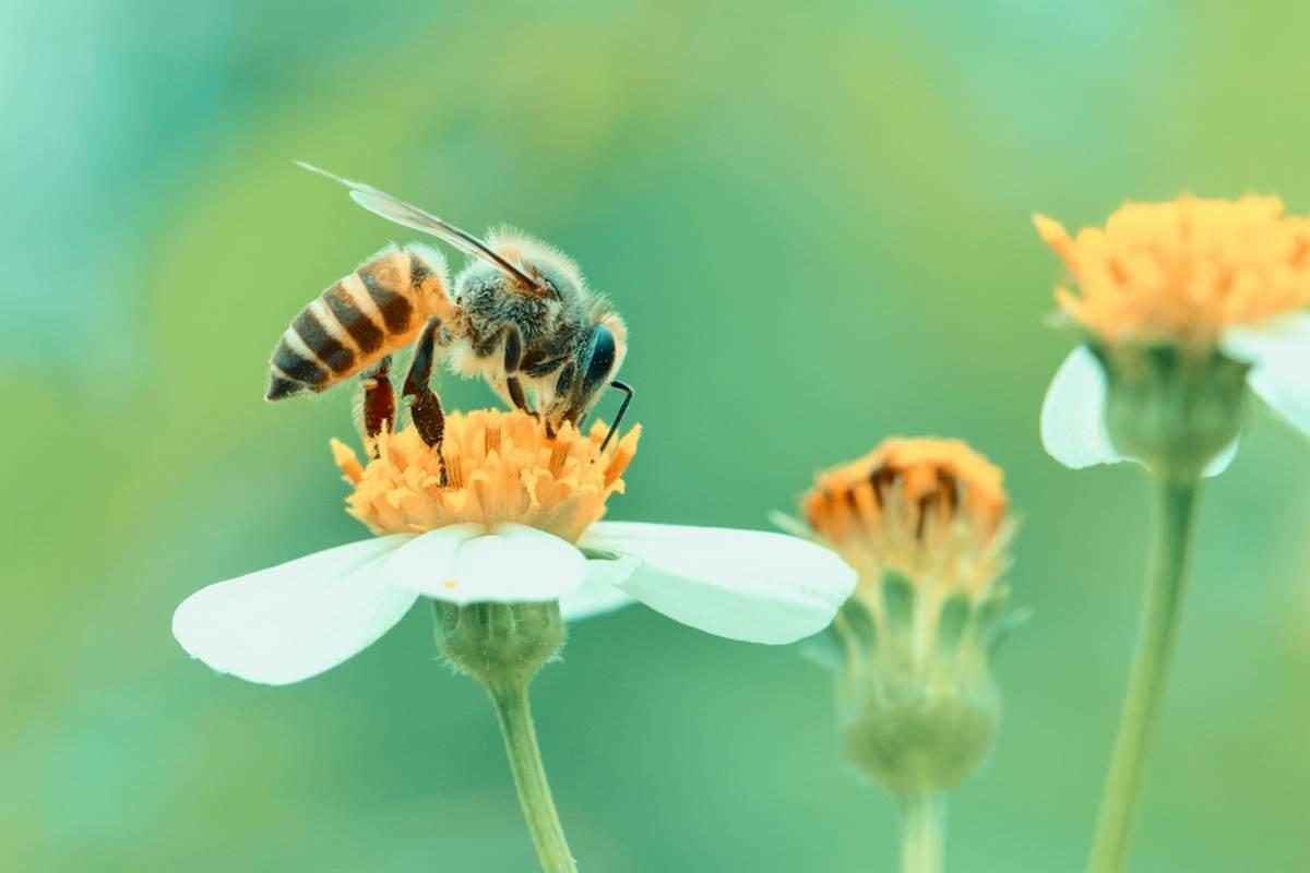 api e insetti impollinatori