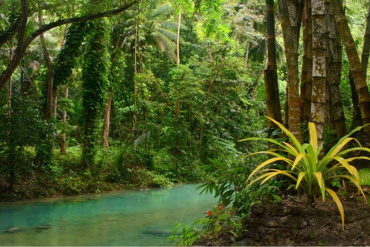 alberi studenti Filippine