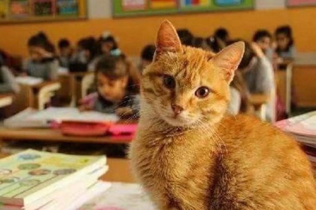 gatto-scuola