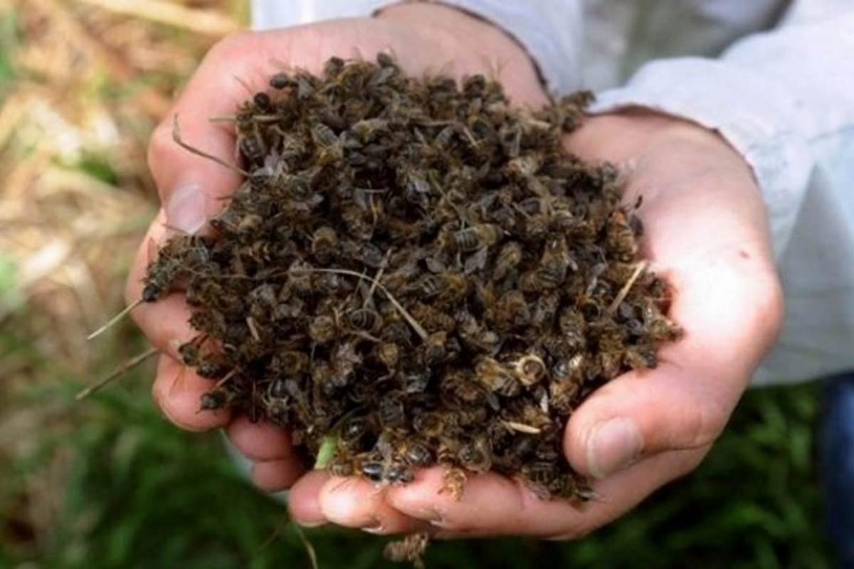 moria-api-veneto